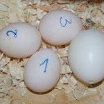 drei Eier und Kunstei
