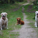 Trainingspartner: Kira, Enie und Skye