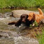 Enie und Balou lieben Wasser!