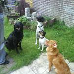 Unsere 4-Pfoten-Gang: Butch, Fina, Jara und Enie