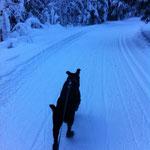 Baxter.. Skijöring.