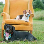 """10th Place: Rascal & Cooper Mess, Beagle and Pittbull Mix from Columbus, OH. """"Why wouldn't they wear CollarDoos bow ties??? They want to be hip!"""""""