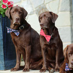 """4th Place: George, Indee & Logan Howlett from Westerville, OH. """"We love our CollarDoos because they are fashion forward just like us, they make us feel good and look great!! WOOF WOOF!!!!!"""""""