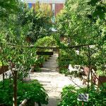 Der Garten vom Claude Monet