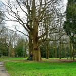 Uralter Baum