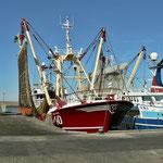 Harlingen, Fischerei Hafen