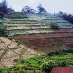 Jutiapa - La Tigra