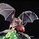En Honduras estan registradas 98 especies de murciélagos, entre los mas llamativos podemos mencionar al murciélago viejito, murciélago pescador, vampiros, murciélagos blancos y el segundo murciélago mas grande de america llamado Phyllostomus hastatus.