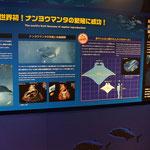 Birth of a manta ray in captivity