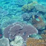 Bunte Korallen mit Kaiserfisch