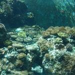 Korallenbecken, überwiegend Steinkorallen