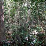 Dschungel (Jungle)