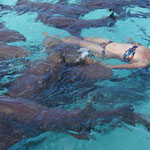 Schwimmen mit Ammenhaie (Swimming with the nurse sharks), Exuma
