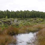 Hapuka Estuary