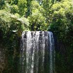 Millaa Millaa Wasserfall (Millaa Millaa waterfall)