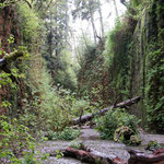 Fern canyon, Redwood National Park