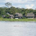 Amazonas Delfin (Grau)