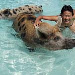 Schweine-Bucht (Pig bay), Exuma