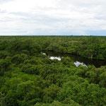 Blick aus einem Aussichtsturm (View from an look-out tower)