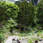 Botanical Garden, Wellington