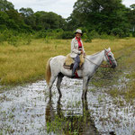Reitstunden im Sumpfgebiet (Horseback riding at the swamp)