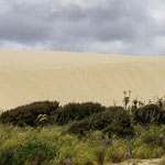 Sanddüne, Nähe Cape Reinga (Sand dunes, close to Cape Reinga)