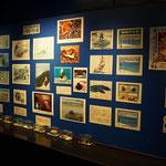Aufklärungsarbeit über Müll im Ozean und deren Folge