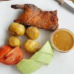 Cuy, Guinea pig