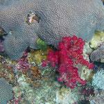 Bunte Korallen