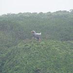 Cape Hedo, Statue vom endemischer Vogel Okinawaralle