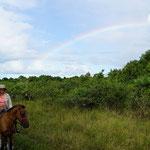 Reitstunden im Sumpfgebiet mit Regenbogen (Horseback riding at the swamp with rainbow)