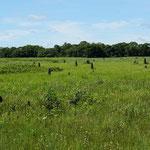 Termitenhügel (termite hill)