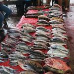 Fische aus dem Amazonas, Markt in Belen