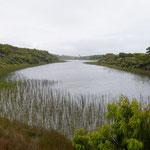 Tauparikaka Marine Reserve