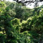 ...similar like rain forest...