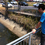 通りかかったクリーク(小川)で生物探し。小学生みたいなことしてみた。