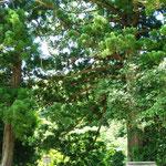 大滝神社 / Otaki shrine