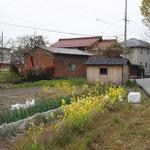 春の畑 / Field of spring