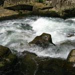 水の流れ #1 / stream #1