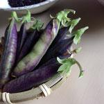 ツタンカーメン豆です
