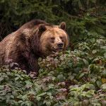 Fotomomente im Bayerischen Wald DE