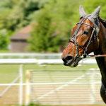 Pferderennen Frauenfeld