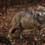 FoFotomomente im Bayerischen Wald DEtomomente im Bayerischen Wald DE