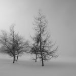 Winterimpression in der Nähe von Gonten AI (CH)