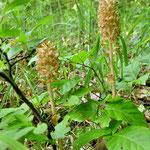 ... wie heißt diese Orchidee gleich wieder? ...
