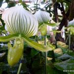 Blumenschau mit Exotischen Schönheiten