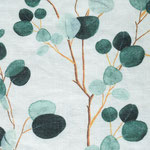 311/Eucalyptus on white