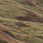 Azerbaijan - Schafe und spektakuläre Lanschaft - Auf der Fahrt von Quba nach Xinaliq