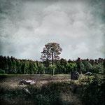 """Mein Siegerbild:  """"86°F - Lüneburger Heide 03"""""""