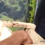 Katzentransportkästchen aus Video